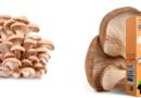 Отзыв о домашней грибнице вешенки