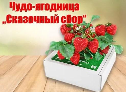 Чудо-ягодница Сказочный сбор в Ставрополе